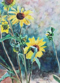 5x7 -570 pixels - Nevada Sunflowers - 3