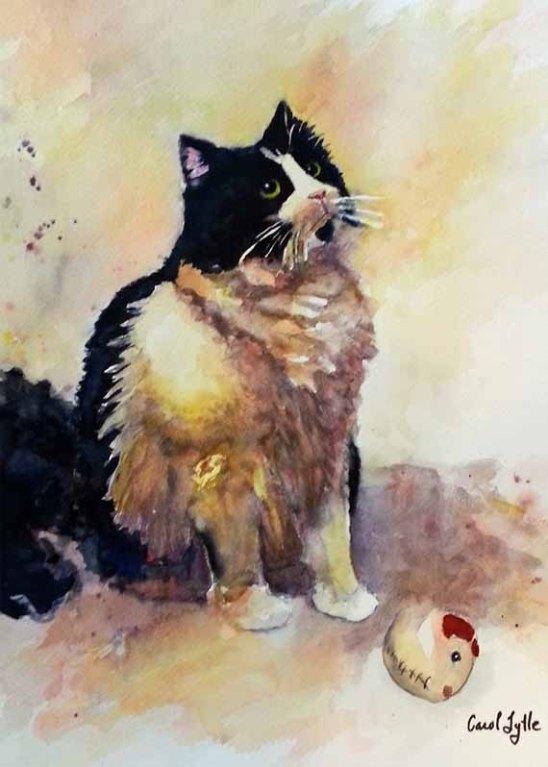 5x7 - 570 pixels -Tuxedo Cat -Munchie