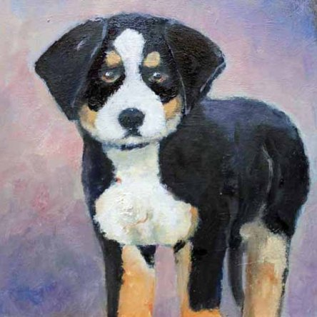 Enhanced - 570 pixels -low- Bernise Mountain Dog 5x5 inch - original oil on Canvas copy 3