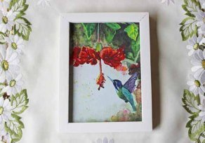 Hummingbird 2 - 570 pixels -with white frame copy