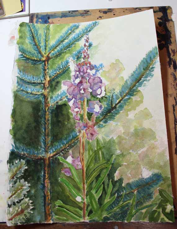 570 pixels -Blog Day 3 - Fireweed and Fir