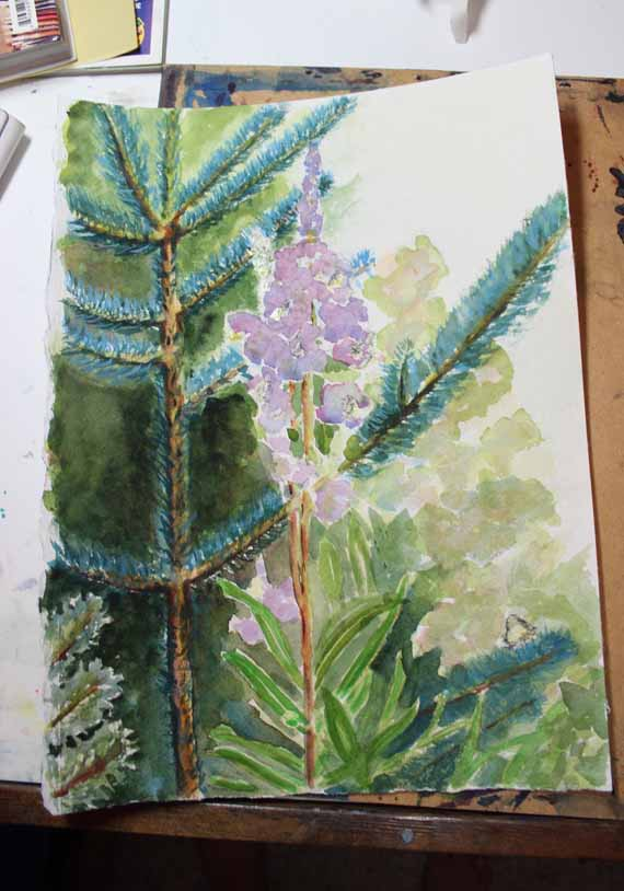 570 pixels -Day 2 - Fireweed and Fir watercolor (1)