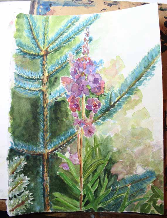 570 pixels - DAY 4 - Blog - .Fireweed and Fir Watercolorjpg