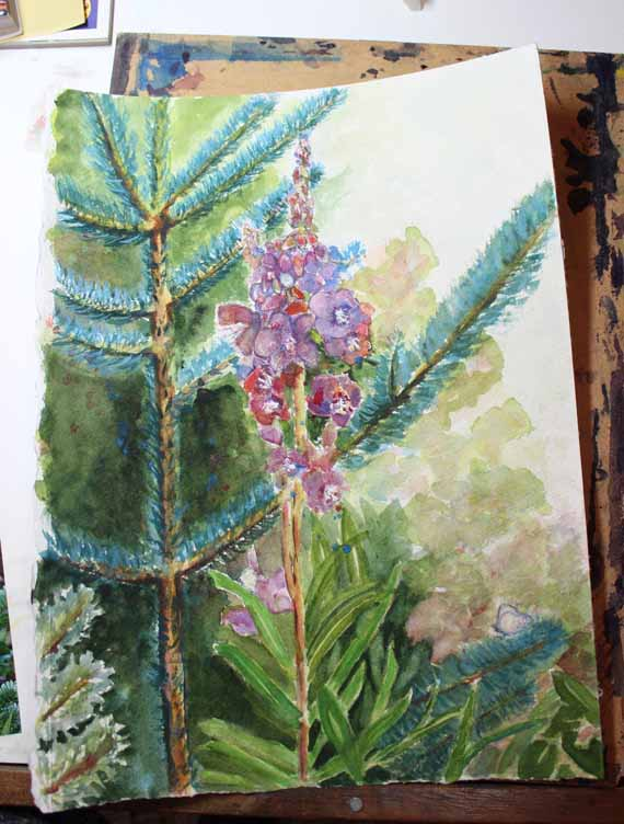 570 pixels -Day 5 - Fireweed and Fir -watercolor