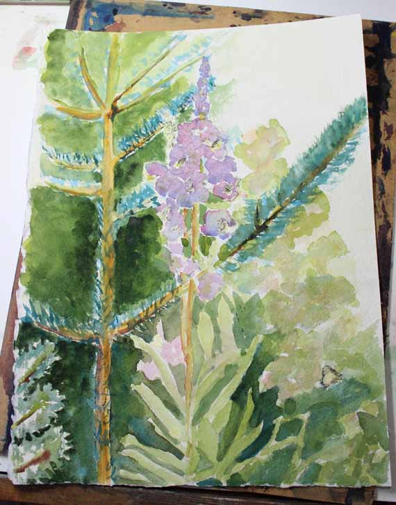 570 pixels -fireweed and pine painting. - watercolor (1)